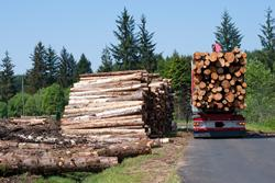 Timber logs being transported on a lorry on a country road
