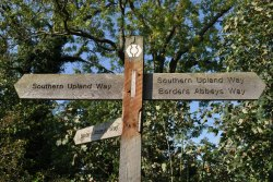 Wooden signpost beside large tree