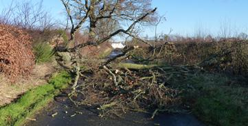 Fallen tree, weather warning, wind